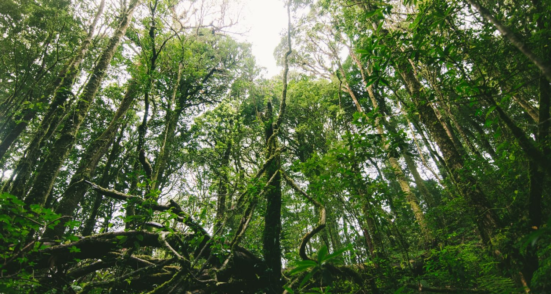 Préparer son décès : les solutions écologiques 1